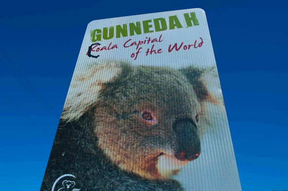 Gunnedah - Koala Capital