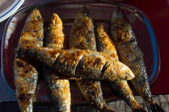 Sardines 6