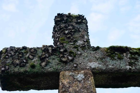 lichen on crosses