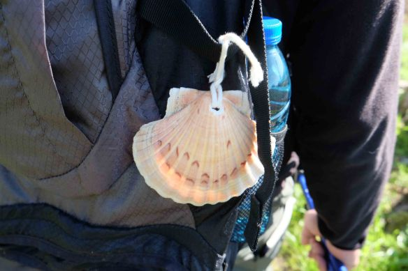 Steve's shell on bp