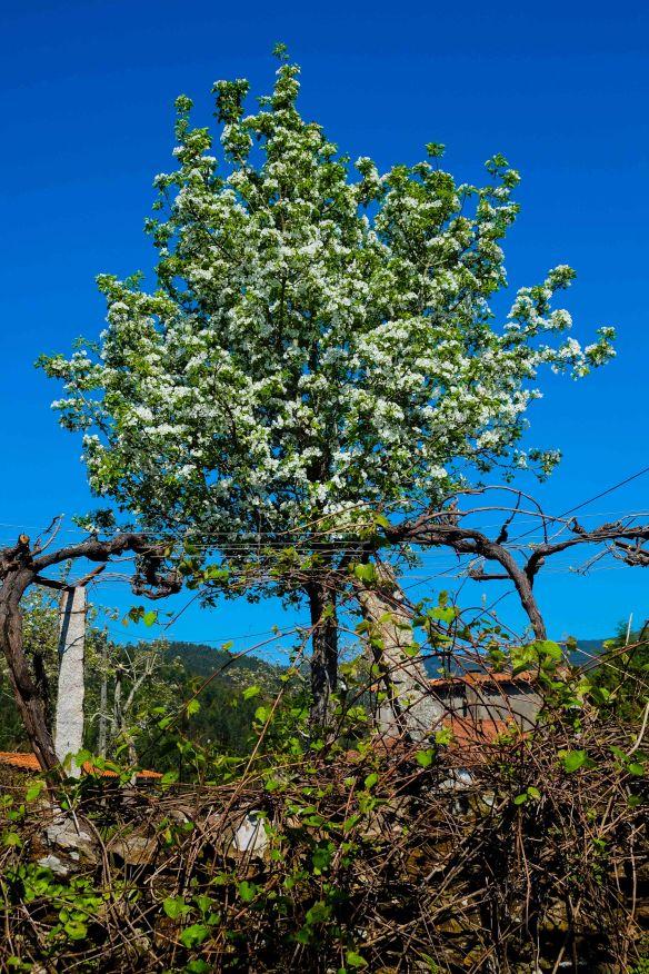 white flowered tree