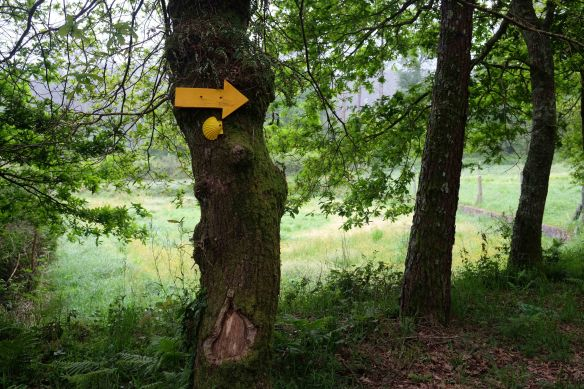 yellow arrow on tree