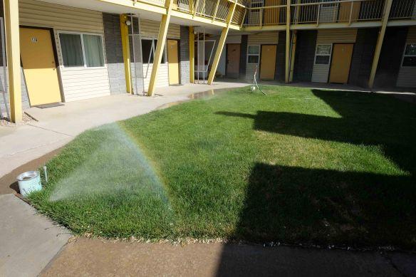 grass with sprinkler