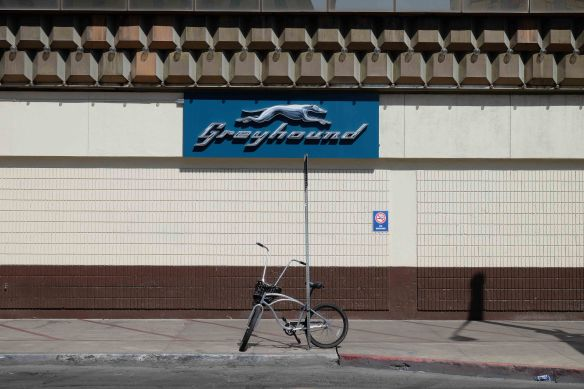 Greyhound and bike