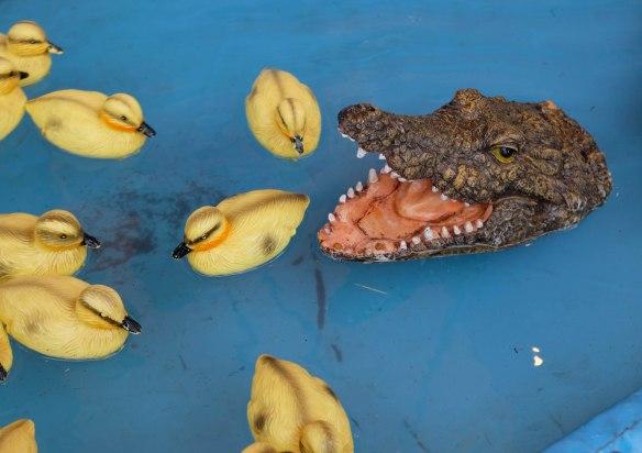 Croc with ducks