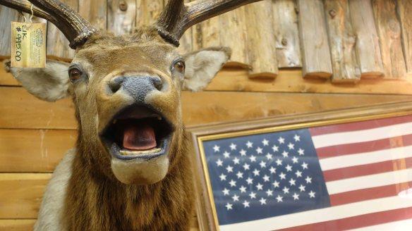 deer & flag