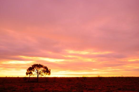 tree on plain at sunset