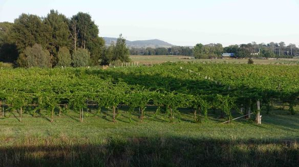 vineyards on edge of town