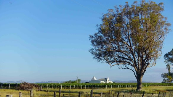 winery & tree