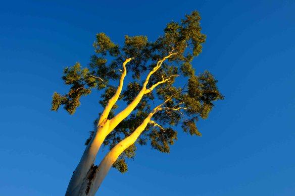 Tree.1