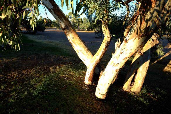 Tree.2