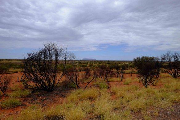 Uluru far away