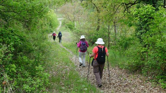 Down woodland path
