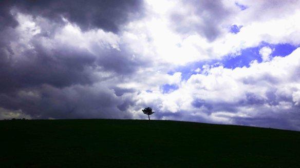 Tree on hill.2