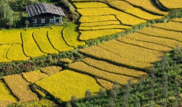 best of India Bhutan-5-2