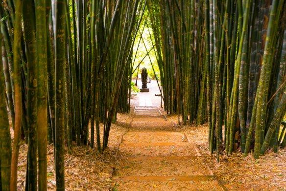 Crystal Castle bamboo grove-1