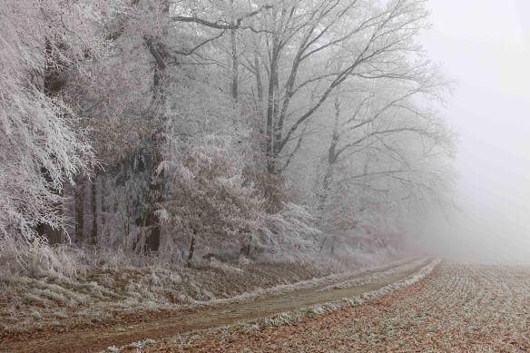 frozen-road